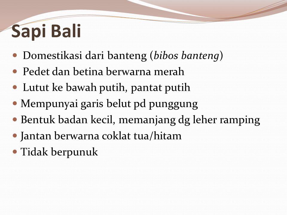 Sapi Bali Domestikasi dari banteng (bibos banteng) Pedet dan betina berwarna merah Lutut ke bawah putih, pantat putih Mempunyai garis belut pd punggung Bentuk badan kecil, memanjang dg leher ramping Jantan berwarna coklat tua/hitam Tidak berpunuk