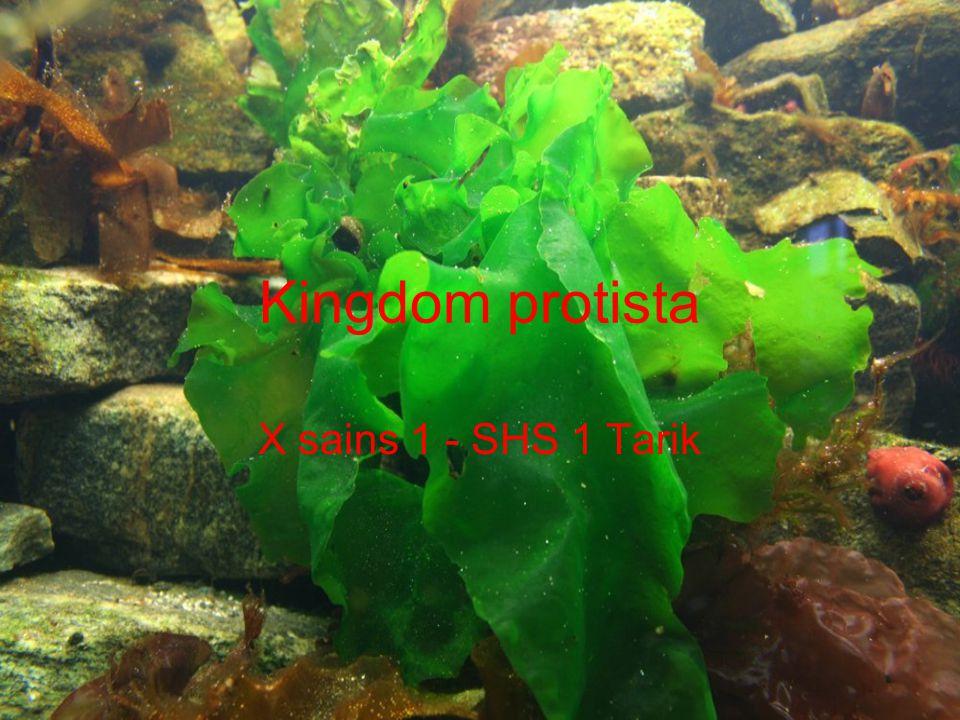 Euglenophyta Uniseluler (bersel satu), Berambut cambuk, satu sampai tiga diujung posterior, Memiliki pigmen fotosintetik, dan stigma, Reproduksi: Aseksual : Membelah diri,