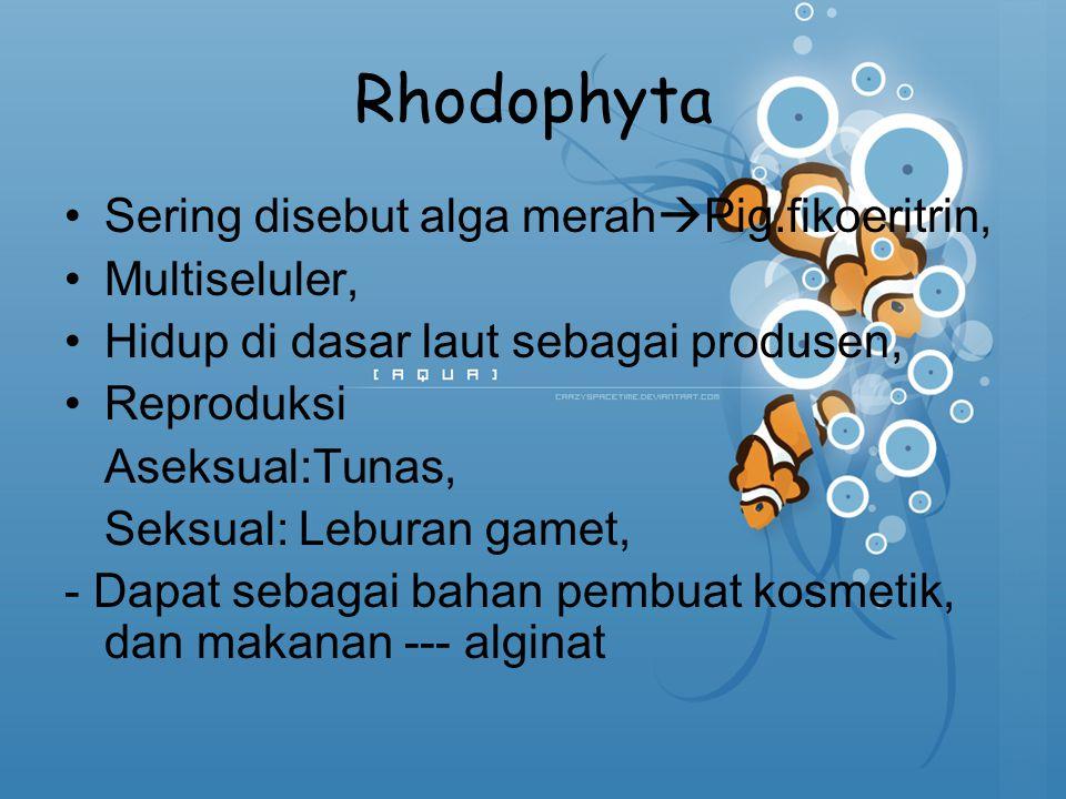 Rhodophyta Sering disebut alga merah  Pig.fikoeritrin, Multiseluler, Hidup di dasar laut sebagai produsen, Reproduksi Aseksual:Tunas, Seksual: Lebura