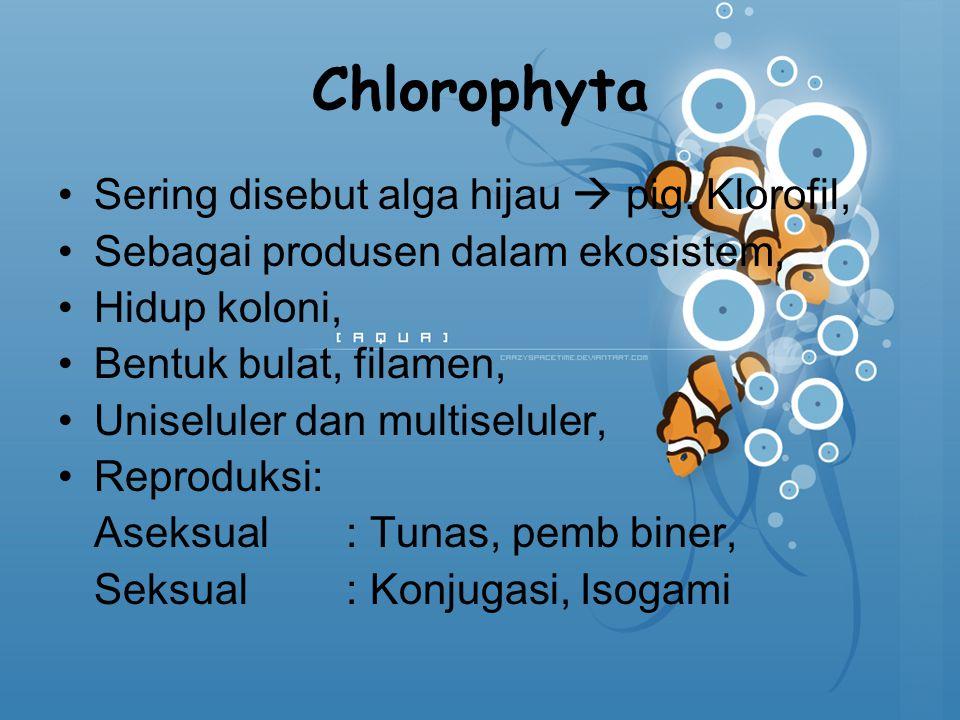 Chlorophyta Sering disebut alga hijau  pig. Klorofil, Sebagai produsen dalam ekosistem, Hidup koloni, Bentuk bulat, filamen, Uniseluler dan multiselu