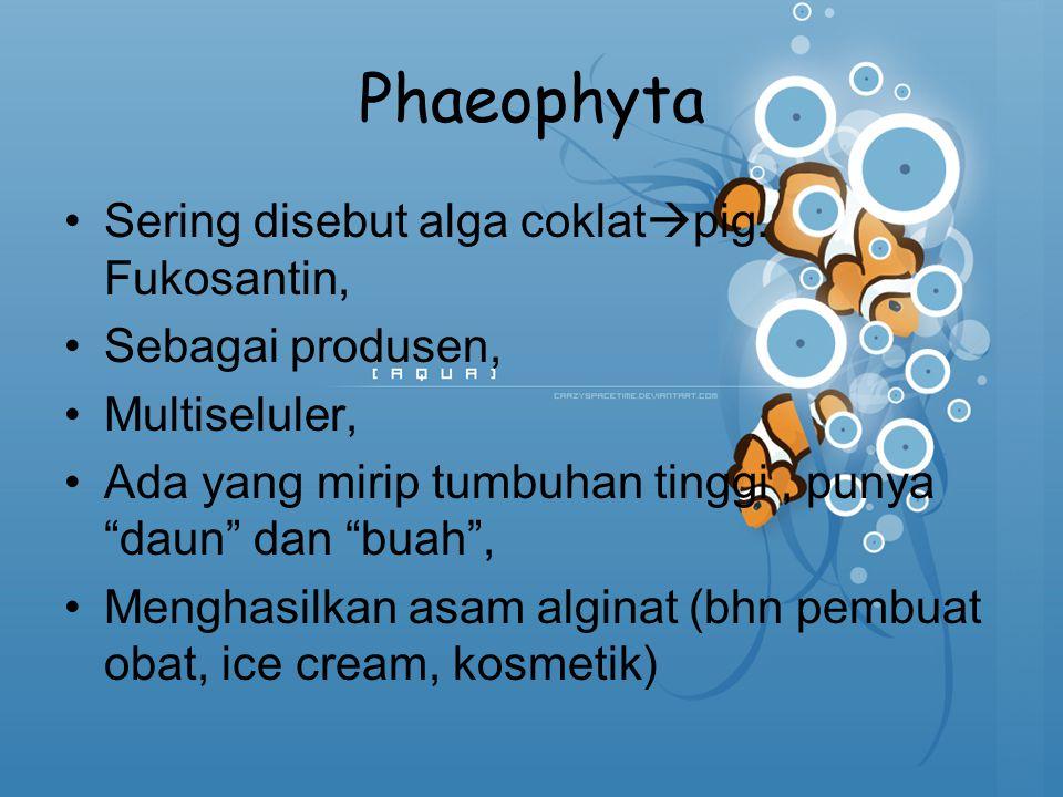"Phaeophyta Sering disebut alga coklat  pig. Fukosantin, Sebagai produsen, Multiseluler, Ada yang mirip tumbuhan tinggi, punya ""daun"" dan ""buah"", Meng"