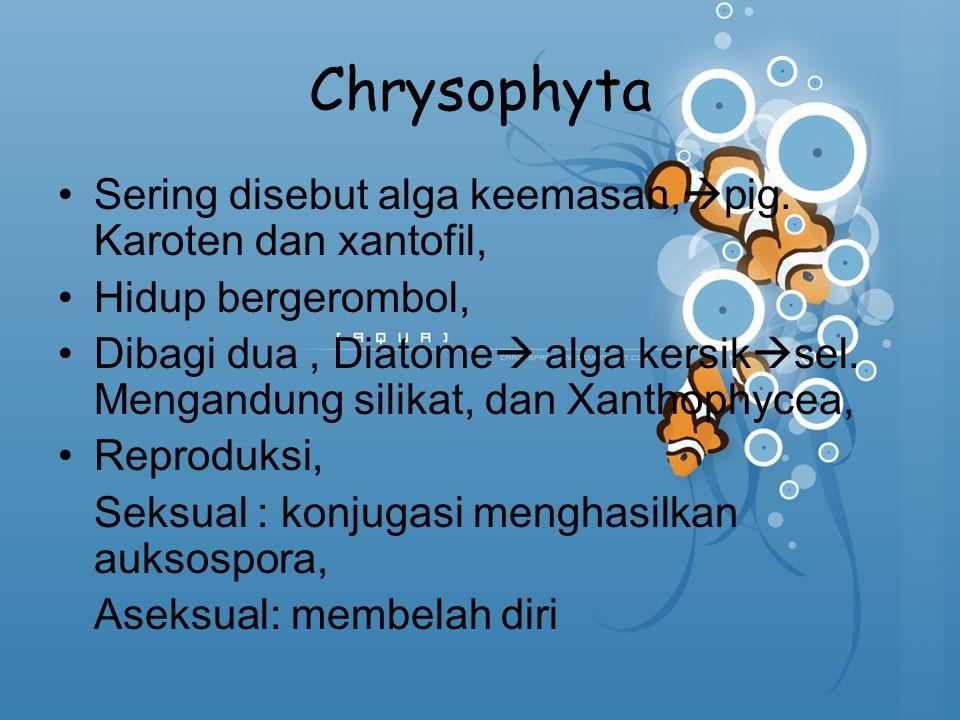 Chrysophyta Sering disebut alga keemasan,  pig. Karoten dan xantofil, Hidup bergerombol, Dibagi dua, Diatome  alga kersik  sel. Mengandung silikat,