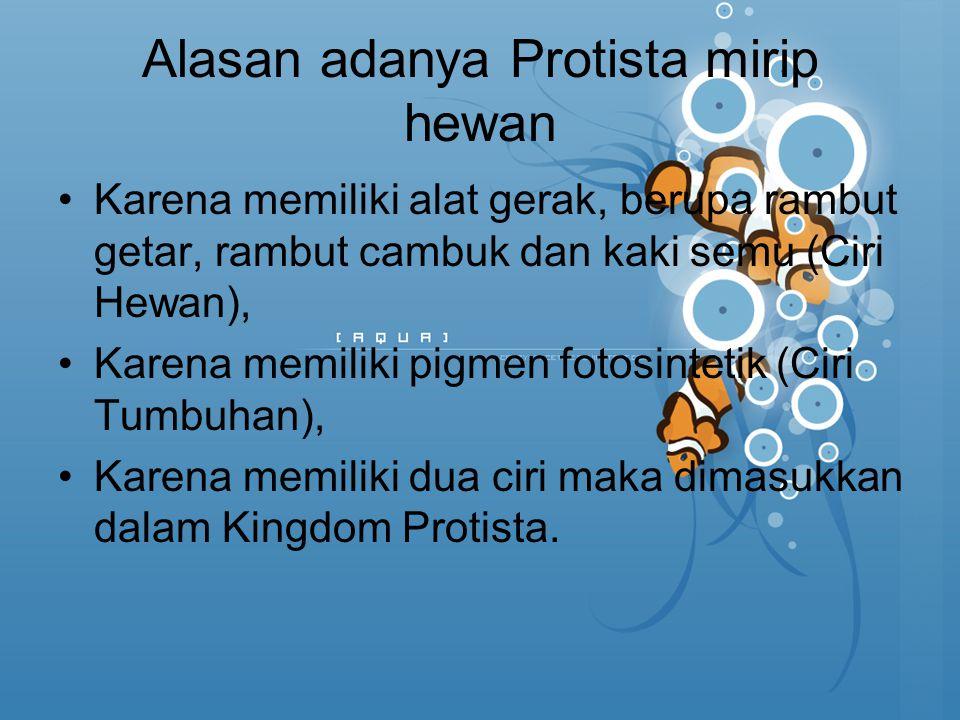 Alasan adanya Protista mirip hewan Karena memiliki alat gerak, berupa rambut getar, rambut cambuk dan kaki semu (Ciri Hewan), Karena memiliki pigmen f