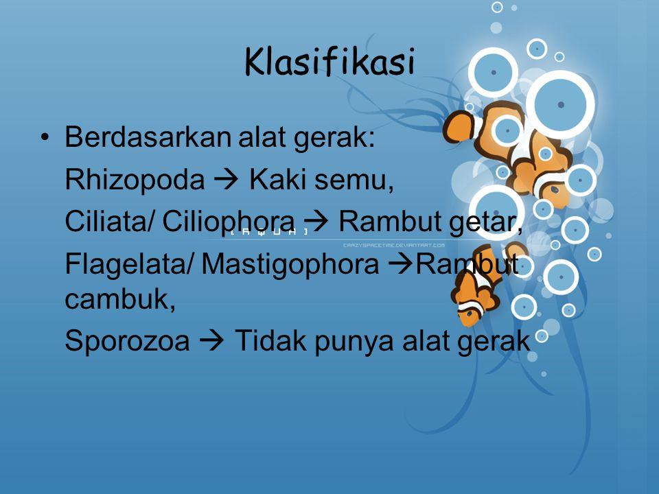 Klasifikasi Berdasarkan alat gerak: Rhizopoda  Kaki semu, Ciliata/ Ciliophora  Rambut getar, Flagelata/ Mastigophora  Rambut cambuk, Sporozoa  Tid