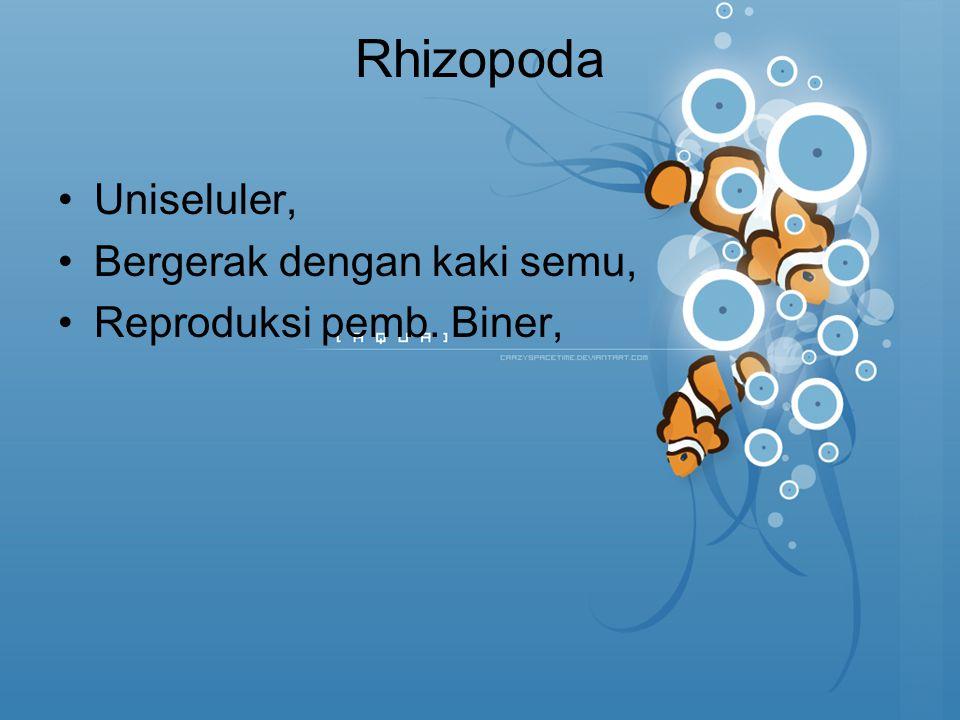 Rhizopoda Uniseluler, Bergerak dengan kaki semu, Reproduksi pemb. Biner,