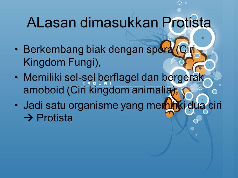 ALasan dimasukkan Protista Berkembang biak dengan spora (Ciri Kingdom Fungi), Memiliki sel-sel berflagel dan bergerak amoboid (Ciri kingdom animalia),