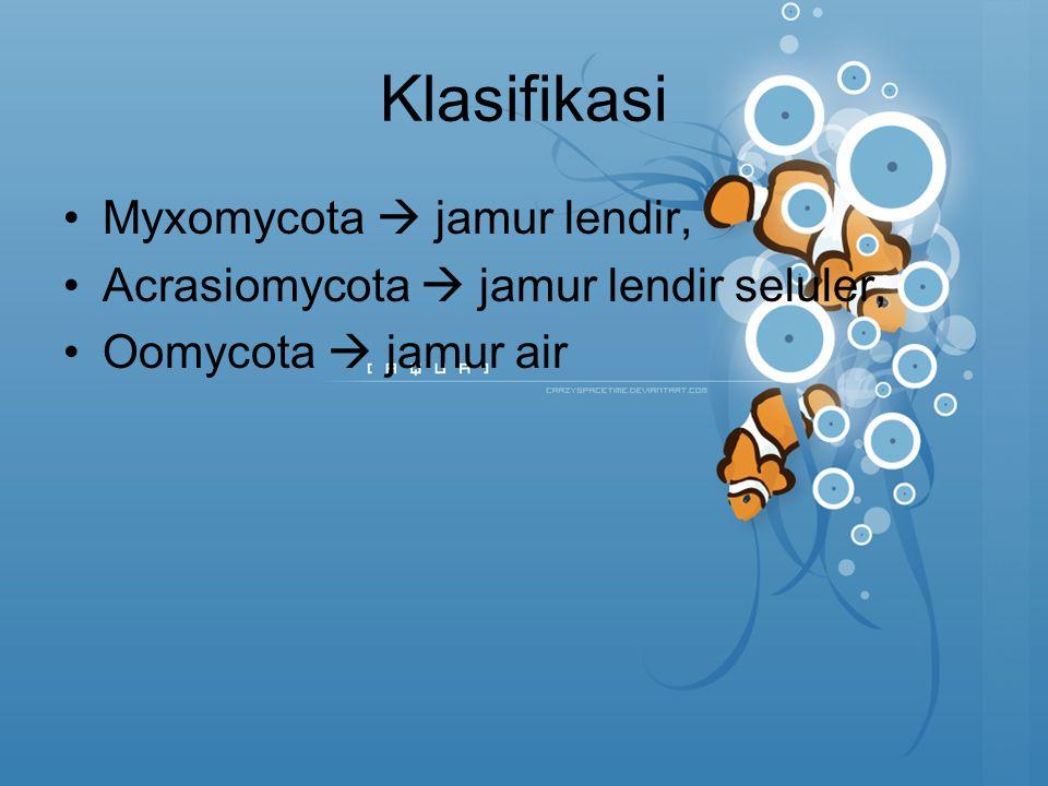 Klasifikasi Myxomycota  jamur lendir, Acrasiomycota  jamur lendir seluler, Oomycota  jamur air