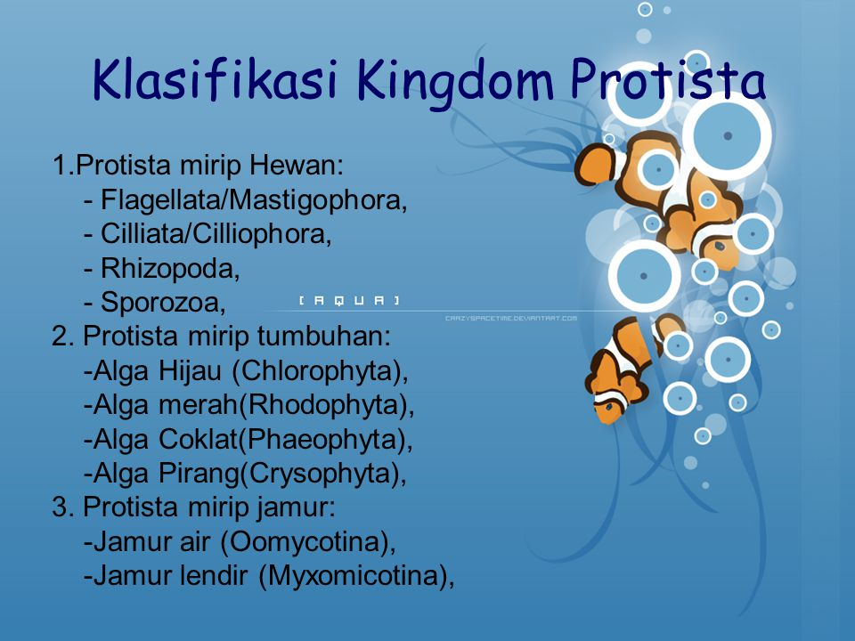 Klasifikasi Kingdom Protista 1.Protista mirip Hewan: - Flagellata/Mastigophora, - Cilliata/Cilliophora, - Rhizopoda, - Sporozoa, 2. Protista mirip tum