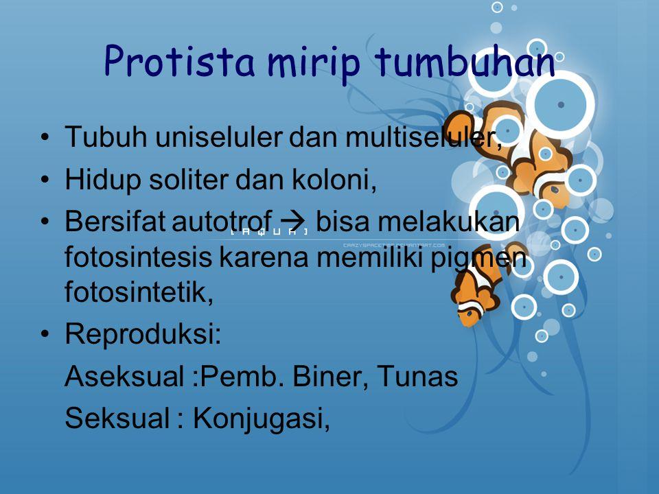 Protista mirip tumbuhan Tubuh uniseluler dan multiseluler, Hidup soliter dan koloni, Bersifat autotrof  bisa melakukan fotosintesis karena memiliki p