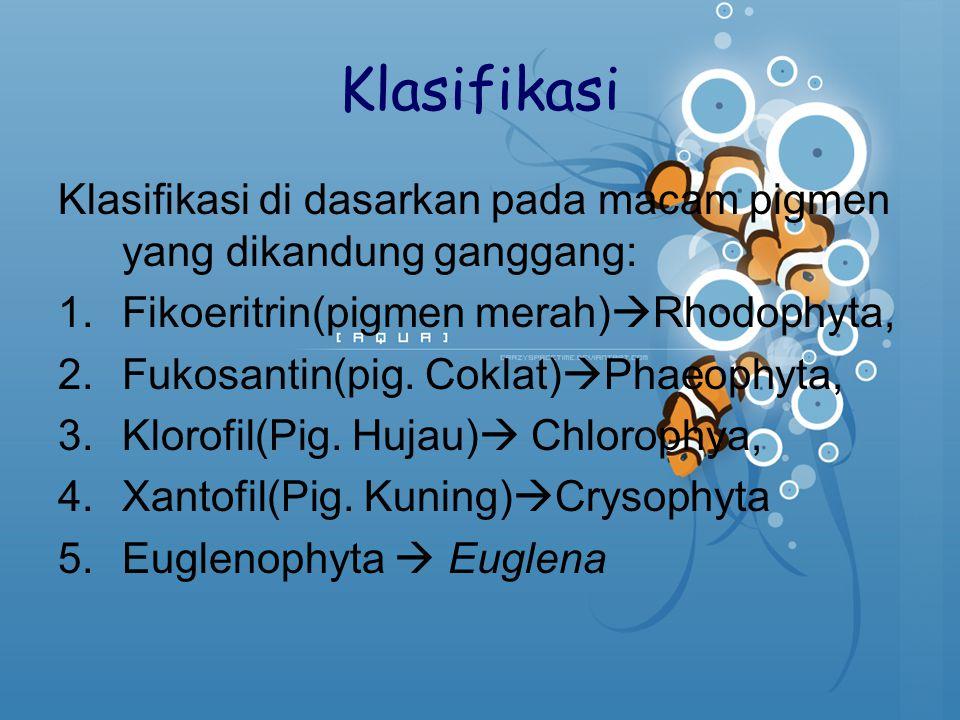 Klasifikasi Klasifikasi di dasarkan pada macam pigmen yang dikandung ganggang: 1.Fikoeritrin(pigmen merah)  Rhodophyta, 2.Fukosantin(pig. Coklat)  P