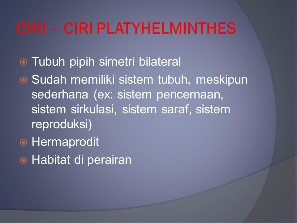 CIRI – CIRI PLATYHELMINTHES  Tubuh pipih simetri bilateral  Sudah memiliki sistem tubuh, meskipun sederhana (ex: sistem pencernaan, sistem sirkulasi