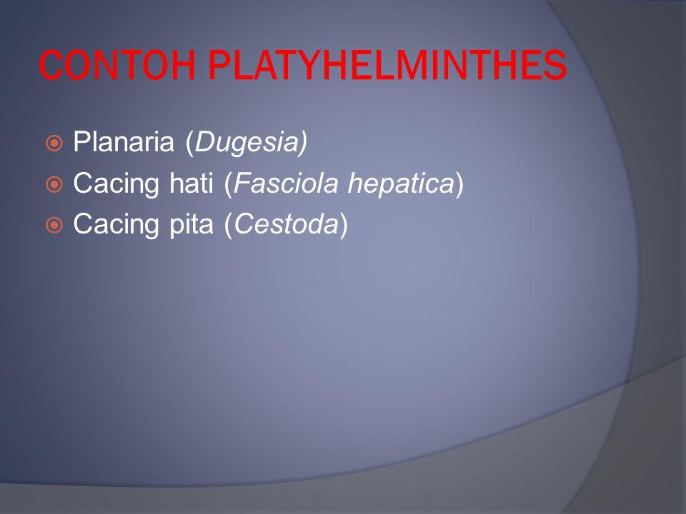 CONTOH PLATYHELMINTHES  Planaria (Dugesia)  Cacing hati (Fasciola hepatica)  Cacing pita (Cestoda)