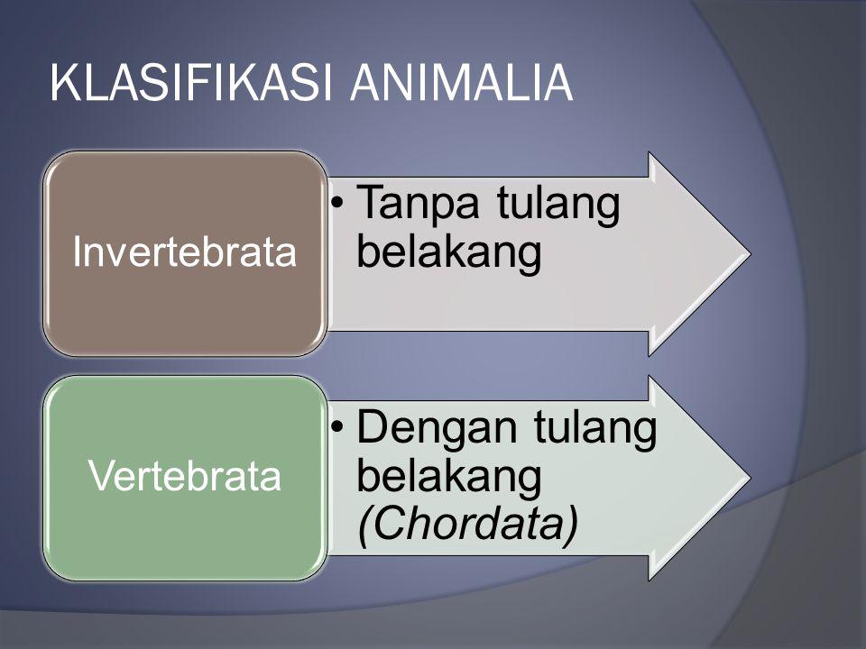 KLASIFIKASI ANIMALIA Tanpa tulang belakang Invertebrata Dengan tulang belakang (Chordata) Vertebrata