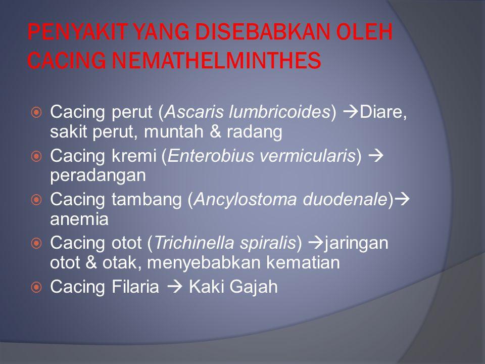 PENYAKIT YANG DISEBABKAN OLEH CACING NEMATHELMINTHES  Cacing perut (Ascaris lumbricoides)  Diare, sakit perut, muntah & radang  Cacing kremi (Enter