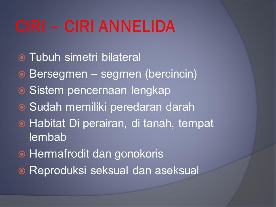 CIRI – CIRI ANNELIDA  Tubuh simetri bilateral  Bersegmen – segmen (bercincin)  Sistem pencernaan lengkap  Sudah memiliki peredaran darah  Habitat