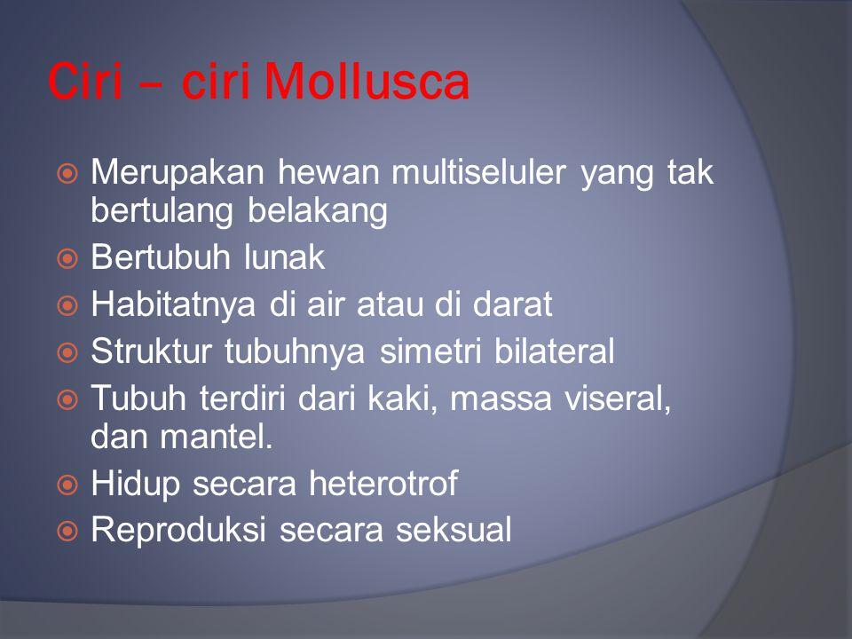 Ciri – ciri Mollusca  Merupakan hewan multiseluler yang tak bertulang belakang  Bertubuh lunak  Habitatnya di air atau di darat  Struktur tubuhnya