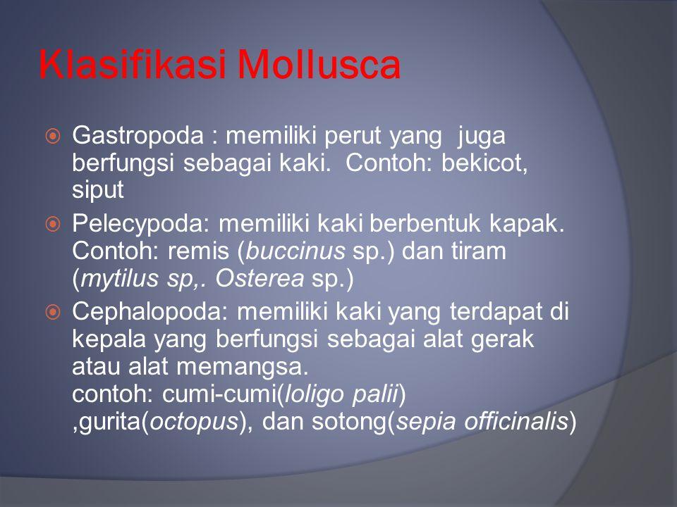 Klasifikasi Mollusca  Gastropoda : memiliki perut yang juga berfungsi sebagai kaki. Contoh: bekicot, siput  Pelecypoda: memiliki kaki berbentuk kapa