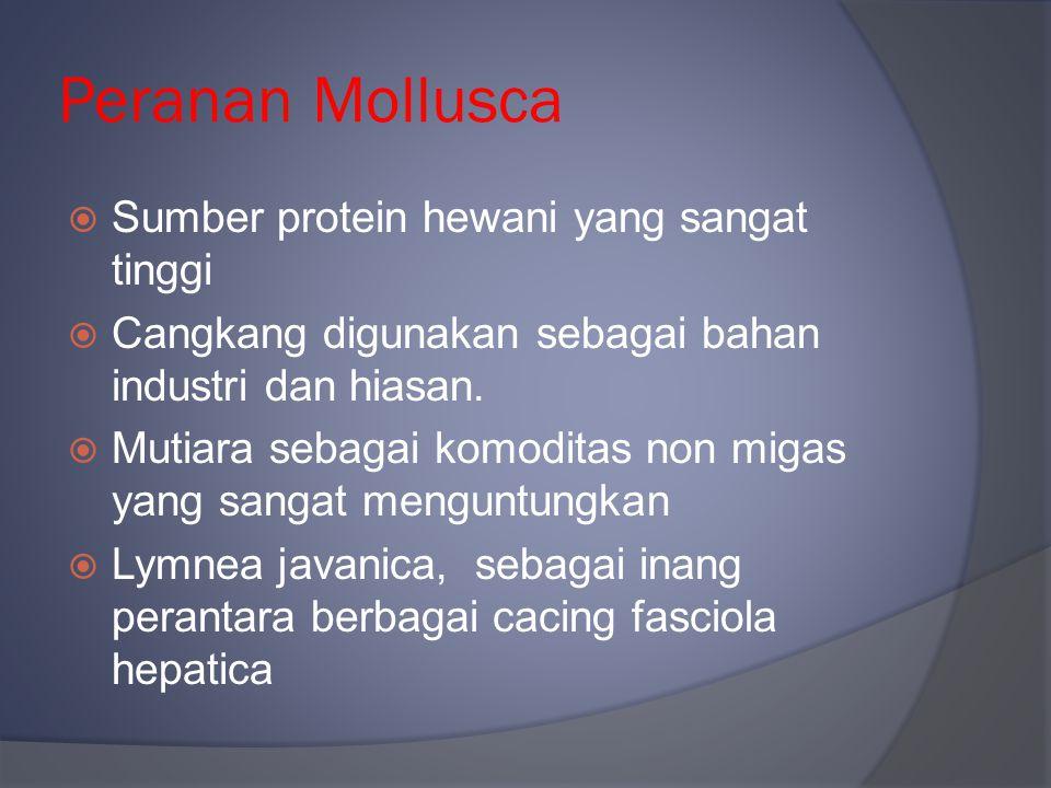 Peranan Mollusca  Sumber protein hewani yang sangat tinggi  Cangkang digunakan sebagai bahan industri dan hiasan.  Mutiara sebagai komoditas non mi
