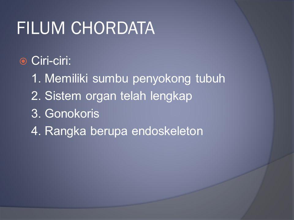 FILUM CHORDATA  Ciri-ciri: 1. Memiliki sumbu penyokong tubuh 2. Sistem organ telah lengkap 3. Gonokoris 4. Rangka berupa endoskeleton