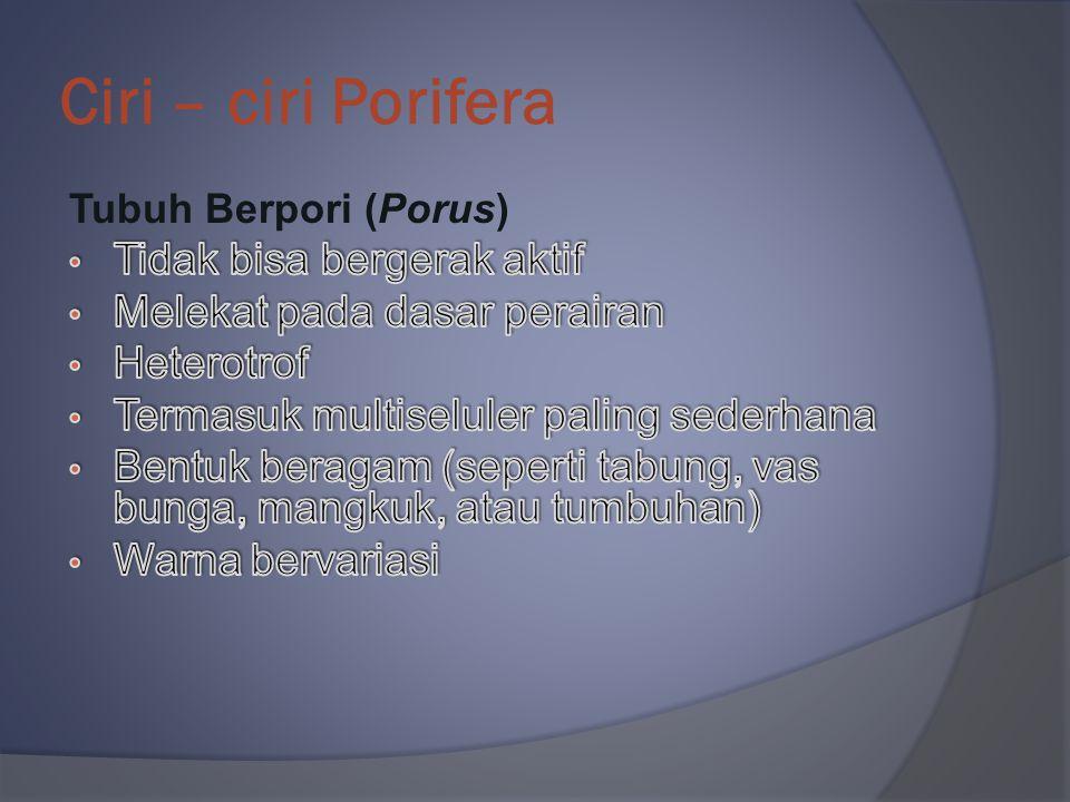 Klasifikasi Chordata 1. Subfilum Tunicata 2. Subfilum Cephalochordata 3. Subfilum Vertebrata