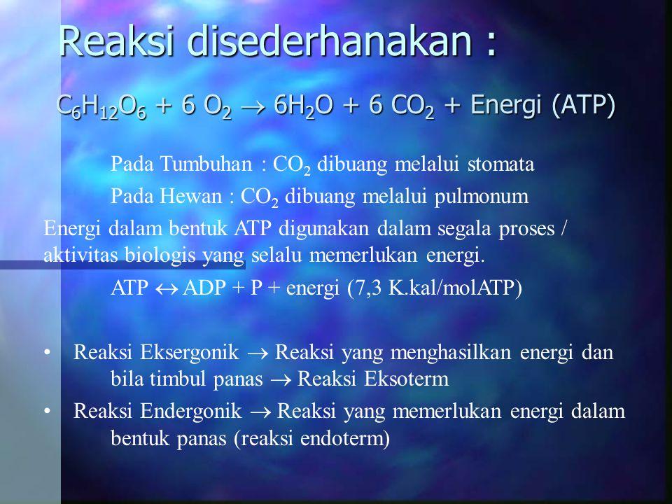 Reaksi disederhanakan : C 6 H 12 O 6 + 6 O 2  6H 2 O + 6 CO 2 + Energi (ATP) Pada Tumbuhan : CO 2 dibuang melalui stomata Pada Hewan : CO 2 dibuang m