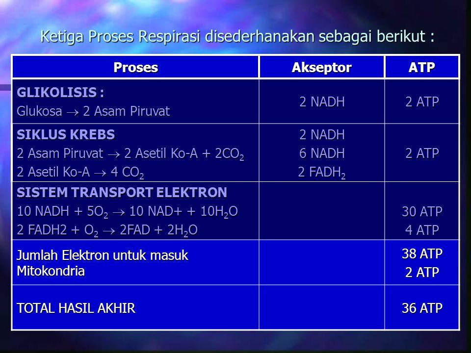 Ketiga Proses Respirasi disederhanakan sebagai berikut : ProsesAkseptorATP GLIKOLISIS : Glukosa  2 Asam Piruvat 2 NADH 2 ATP SIKLUS KREBS 2 Asam Piru