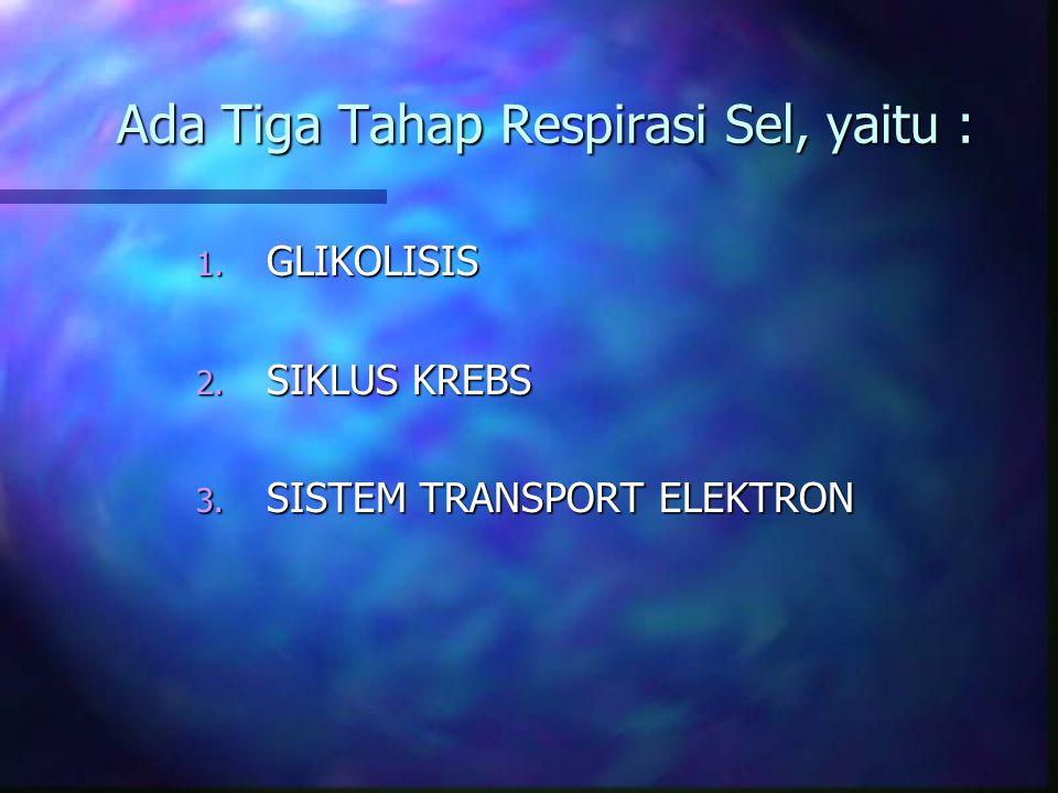 Ada Tiga Tahap Respirasi Sel, yaitu : 1. GLIKOLISIS 2. SIKLUS KREBS 3. SISTEM TRANSPORT ELEKTRON