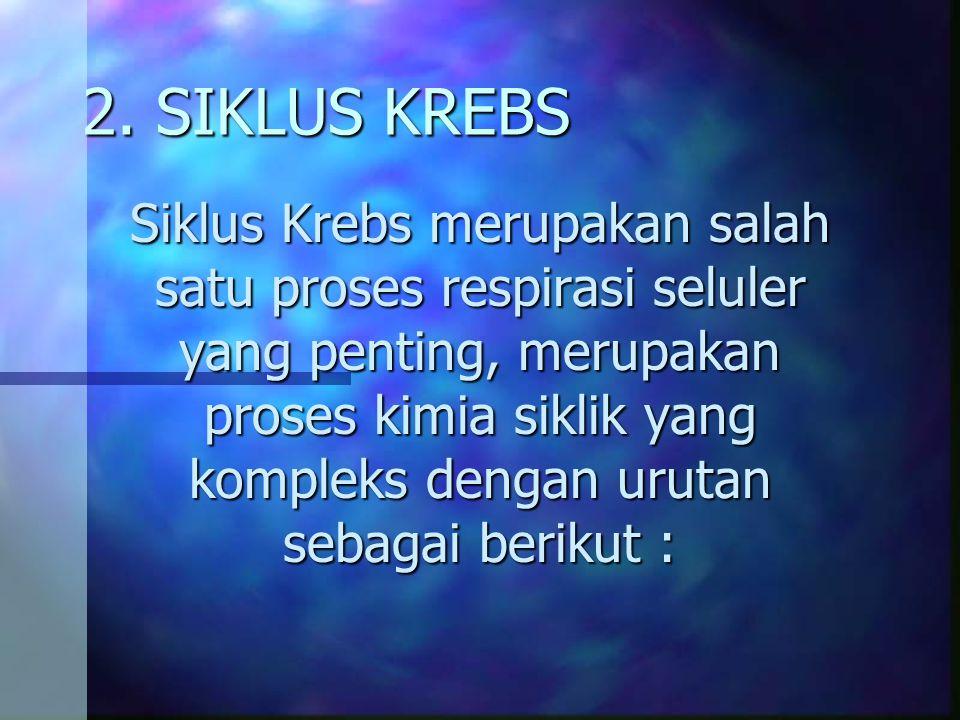 2. SIKLUS KREBS Siklus Krebs merupakan salah satu proses respirasi seluler yang penting, merupakan proses kimia siklik yang kompleks dengan urutan seb