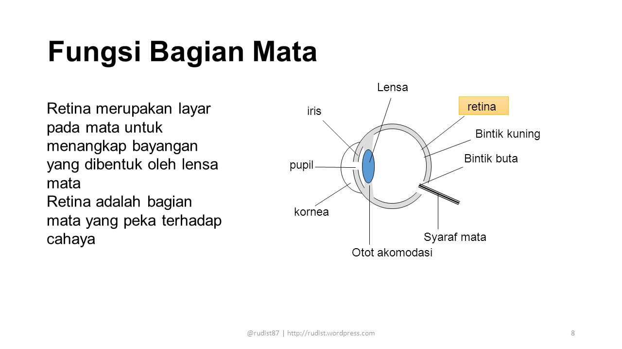 Fungsi Bagian Mata Lensa retina pupil kornea iris Bintik buta Syaraf mata Otot akomodasi Bintik kuning Retina merupakan layar pada mata untuk menangka
