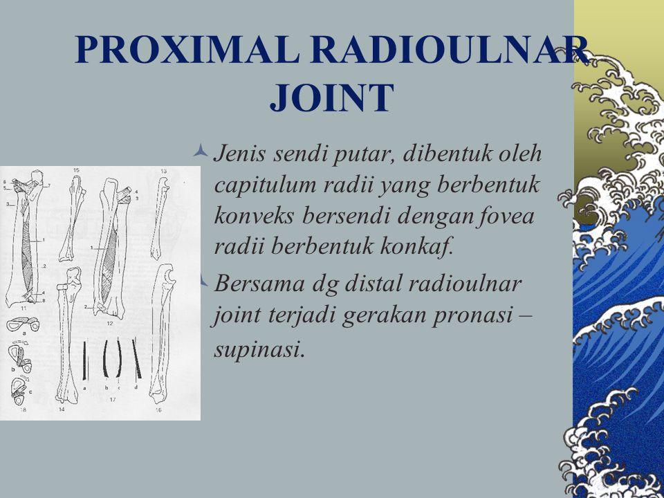 PROXIMAL RADIOULNAR JOINT Jenis sendi putar, dibentuk oleh capitulum radii yang berbentuk konveks bersendi dengan fovea radii berbentuk konkaf. Bersam