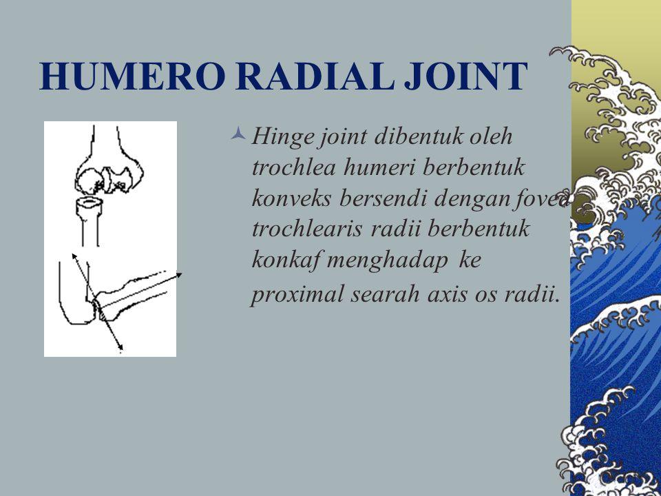 HUMERO RADIAL JOINT Hinge joint dibentuk oleh trochlea humeri berbentuk konveks bersendi dengan fovea trochlearis radii berbentuk konkaf menghadap ke