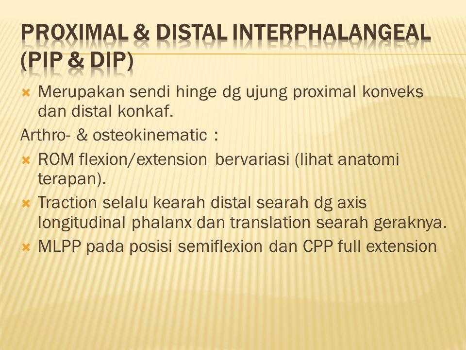  Merupakan sendi hinge dg ujung proximal konveks dan distal konkaf.