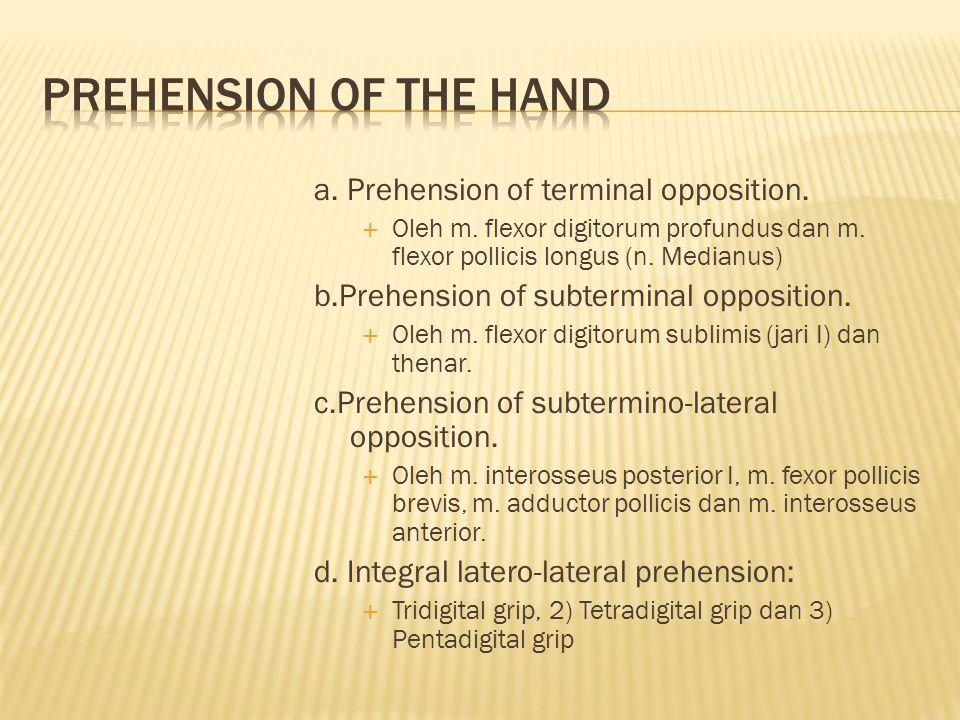 a.Prehension of terminal opposition.  Oleh m. flexor digitorum profundus dan m.