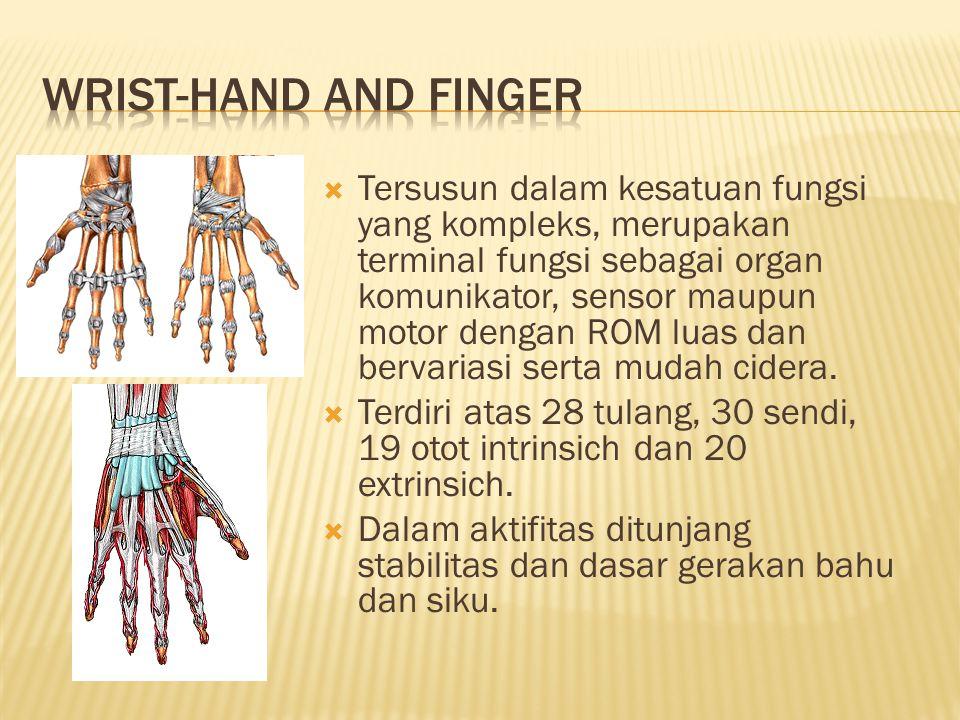  Tersusun dalam kesatuan fungsi yang kompleks, merupakan terminal fungsi sebagai organ komunikator, sensor maupun motor dengan ROM luas dan bervariasi serta mudah cidera.