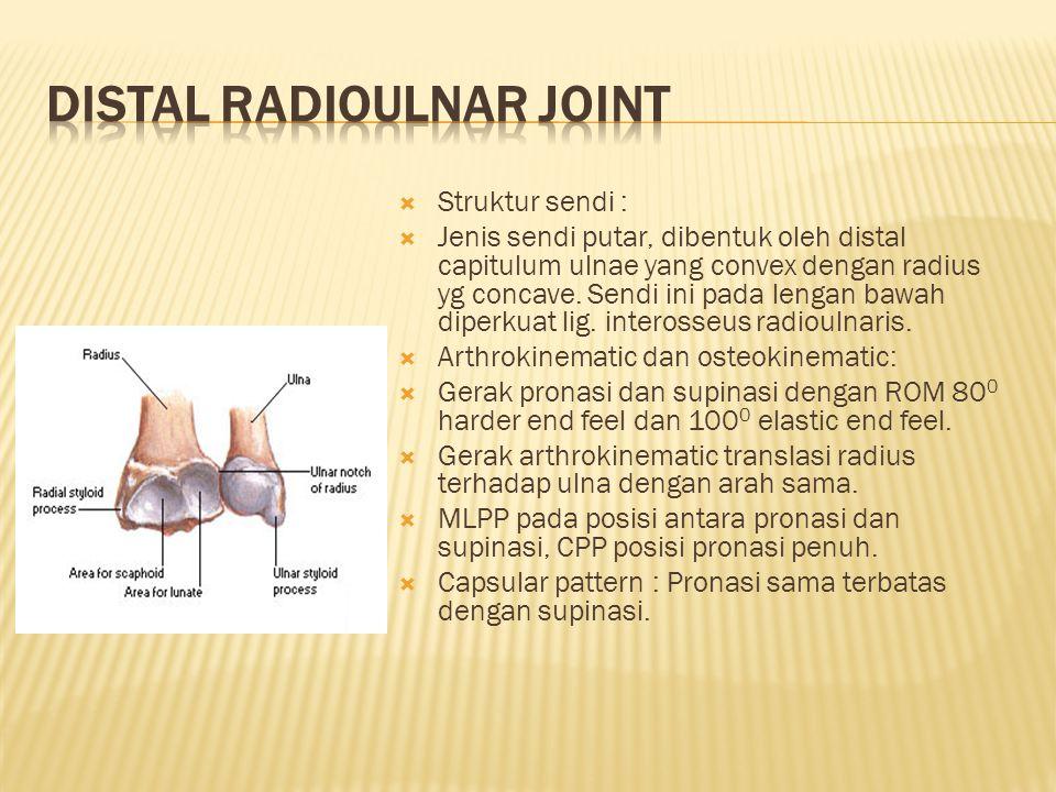  Merupakan ovoid joint dimana os radius konkaf menghadap kedistal sedikit serong kepalmar 5 0 bersendi dengan carpus yang berbentuk konveks.