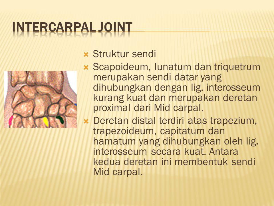  Struktur sendi  Scapoideum, lunatum dan triquetrum merupakan sendi datar yang dihubungkan dengan lig.
