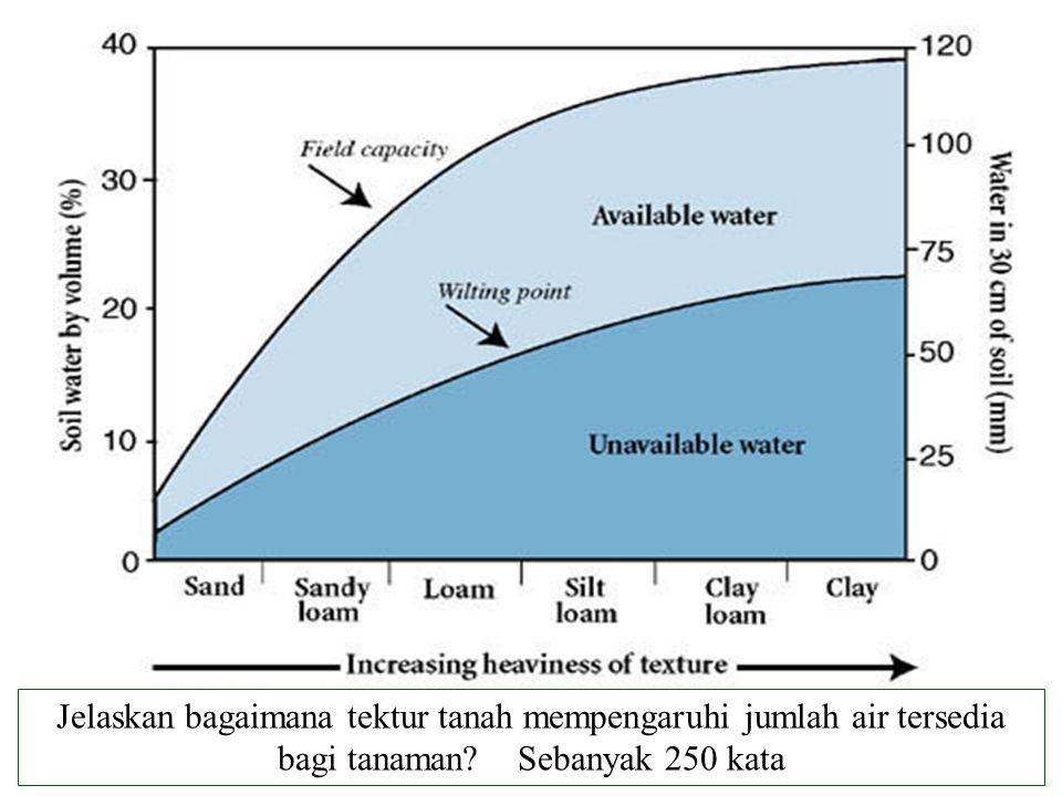 Jelaskan bagaimana tektur tanah mempengaruhi jumlah air tersedia bagi tanaman? Sebanyak 250 kata