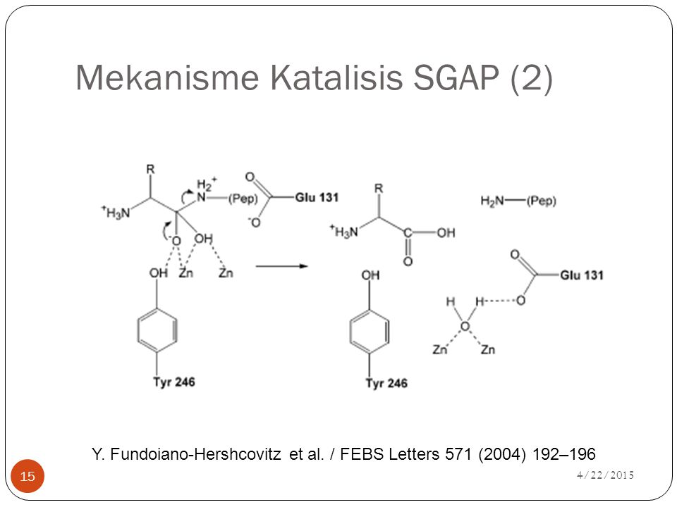 4/22/2015 15 Mekanisme Katalisis SGAP (2) Y. Fundoiano-Hershcovitz et al. / FEBS Letters 571 (2004) 192–196
