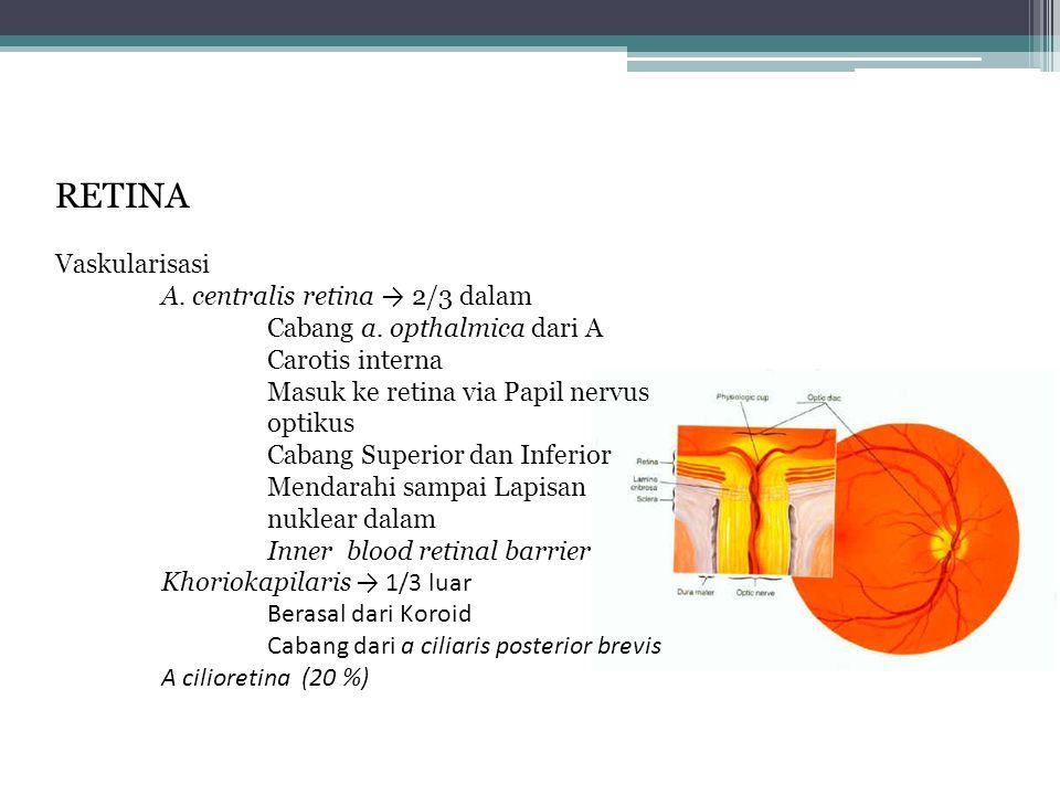 RETINA Vaskularisasi A.centralis retina → 2/3 dalam Cabang a.