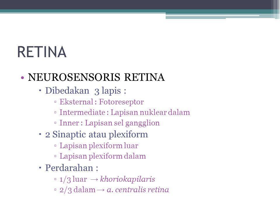 RETINA NEUROSENSORIS RETINA  Dibedakan 3 lapis : ▫Eksternal : Fotoreseptor ▫Intermediate : Lapisan nuklear dalam ▫Inner : Lapisan sel gangglion  2 Sinaptic atau plexiform ▫Lapisan plexiform luar ▫Lapisan plexiform dalam  Perdarahan : ▫1/3 luar → khoriokapilaris ▫2/3 dalam → a.