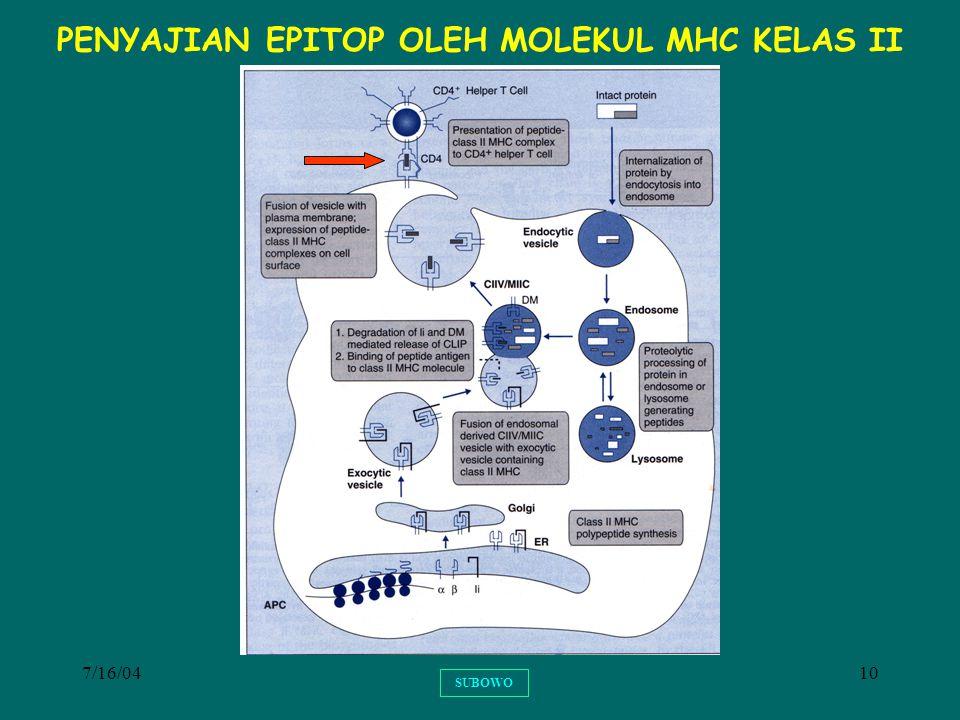 7/16/0410 SUBOWO PENYAJIAN EPITOP OLEH MOLEKUL MHC KELAS II