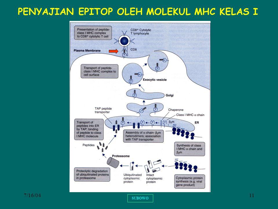 7/16/0411 SUBOWO PENYAJIAN EPITOP OLEH MOLEKUL MHC KELAS I