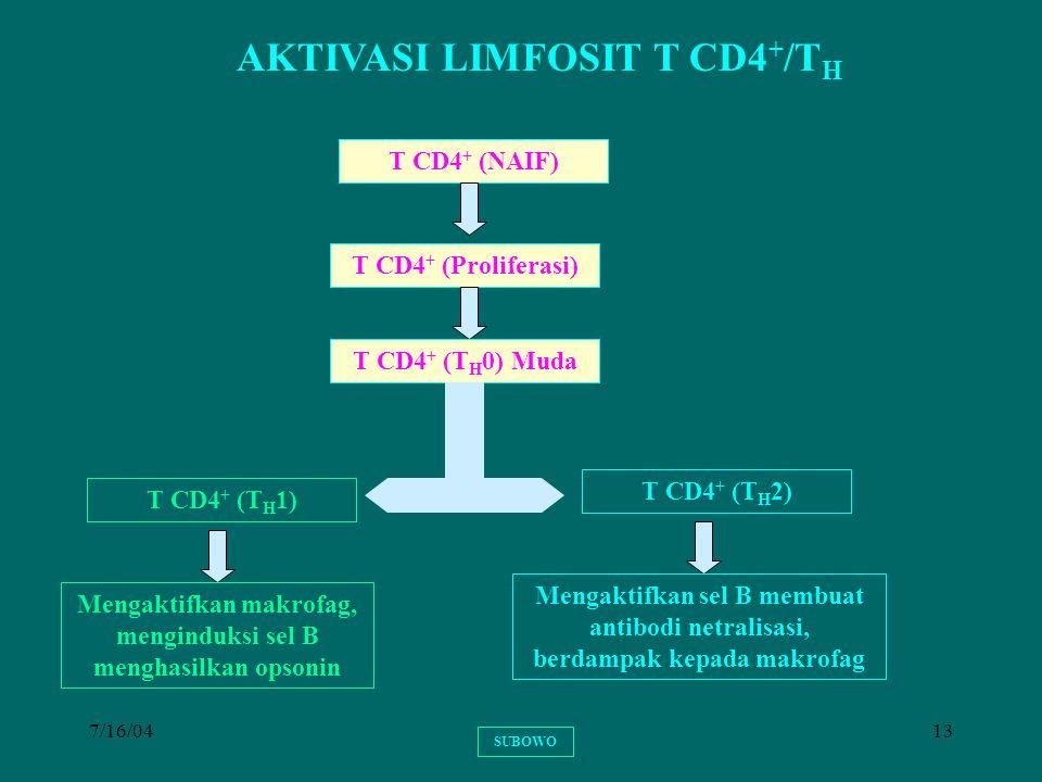7/16/0413 AKTIVASI LIMFOSIT T CD4 + /T H T CD4 + (NAIF) T CD4 + (Proliferasi) T CD4 + (T H 0) Muda T CD4 + (T H 1) Mengaktifkan makrofag, menginduksi