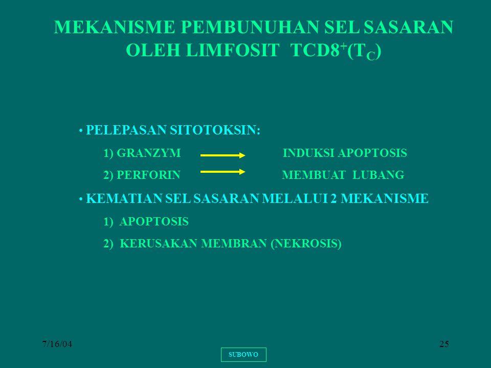 7/16/0425 SUBOWO MEKANISME PEMBUNUHAN SEL SASARAN OLEH LIMFOSIT TCD8 + (T C ) PELEPASAN SITOTOKSIN: 1) GRANZYM INDUKSI APOPTOSIS 2) PERFORIN MEMBUAT L
