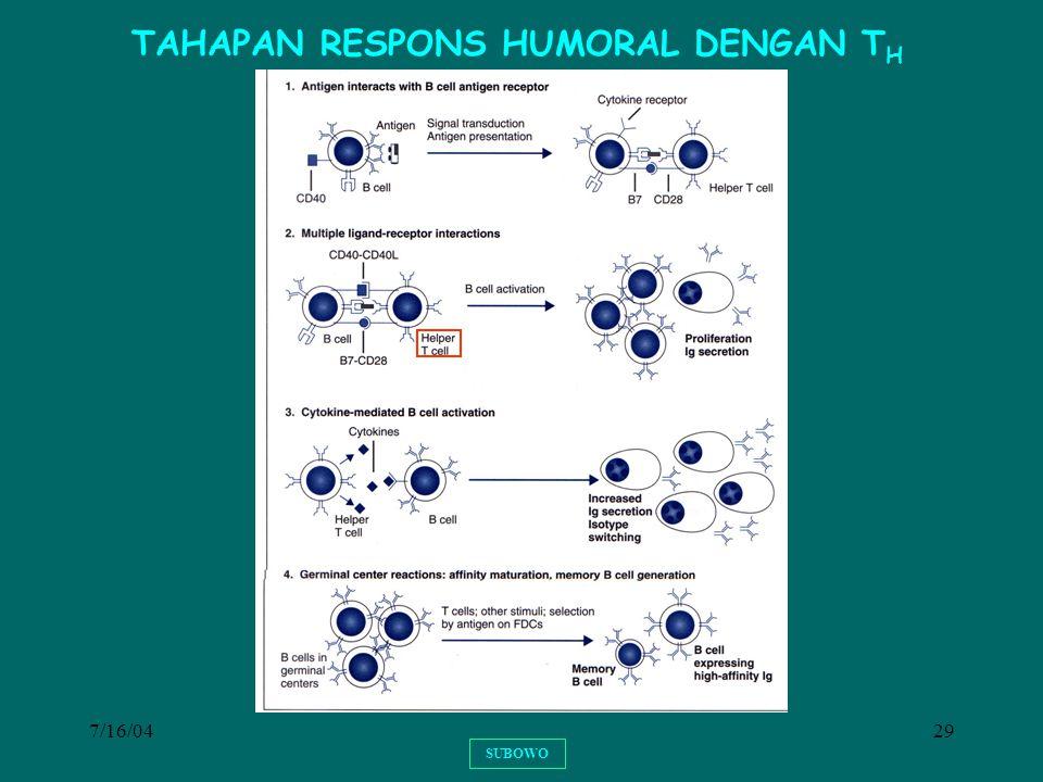 7/16/0429 SUBOWO TAHAPAN RESPONS HUMORAL DENGAN T H