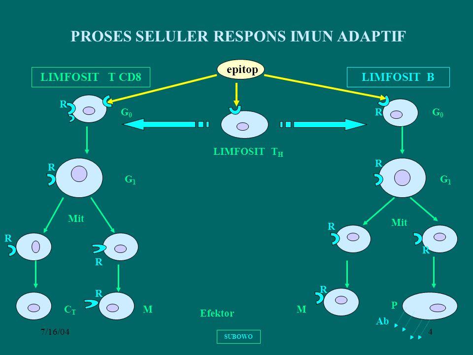 7/16/045 LIMFOSIT T TIDAK DAPAT MENGENALI SECARA LANGSUNG EPITOP AKTIVASI LIMFOSIT T MEMBUTUHKAN MOLEKUL PENYAJI EPITOP (MHC) YANG DIMILIKI SEL PENYAJI TERDAPAT SUBPOPULASI : LIMFOSIT T CD4 + DAN LIMFOSIT T CD8 + SUBOWO