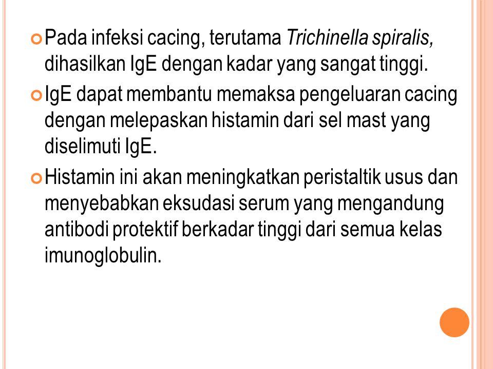 Pada infeksi cacing, terutama Trichinella spiralis, dihasilkan IgE dengan kadar yang sangat tinggi. IgE dapat membantu memaksa pengeluaran cacing deng
