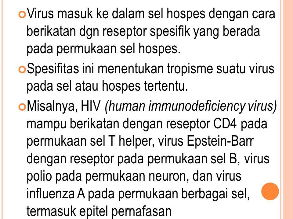 Virus masuk ke dalam sel hospes dengan cara berikatan dgn reseptor spesifik yang berada pada permukaan sel hospes. Spesifitas ini menentukan tropisme