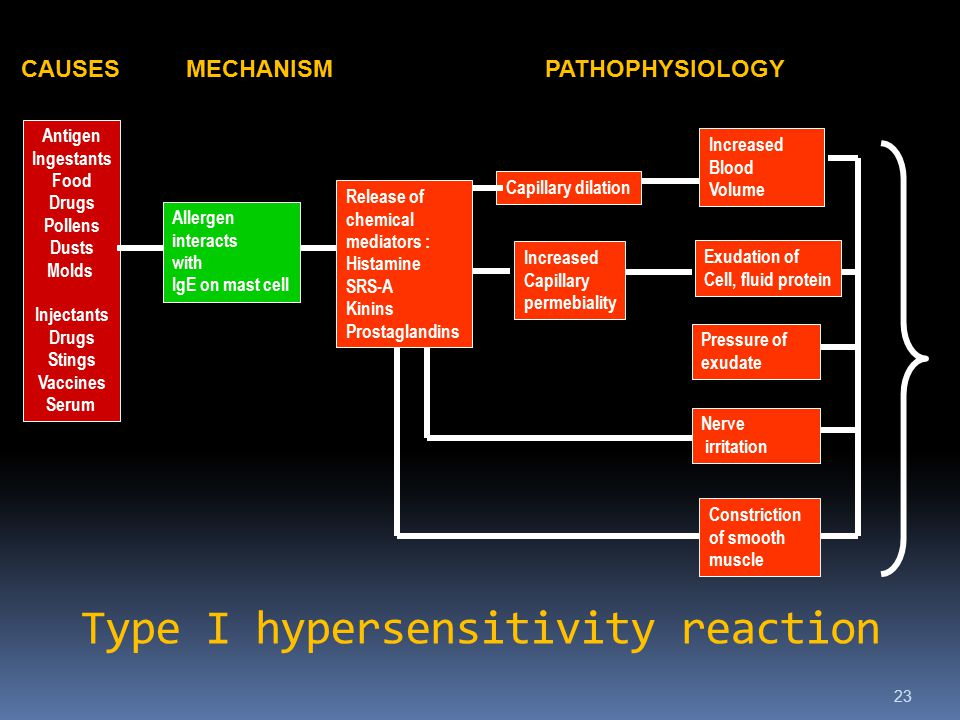 Type I hypersensitivity reaction 23 Capillary dilation Pressure of exudate Release of chemical mediators : Histamine SRS-A Kinins Prostaglandins Increased Blood Volume Increased Capillary permebiality Exudation of Cell, fluid protein Nerve irritation Constriction of smooth muscle Antigen Ingestants Food Drugs Pollens Dusts Molds Injectants Drugs Stings Vaccines Serum Allergen interacts with IgE on mast cell CAUSESMECHANISMPATHOPHYSIOLOGY