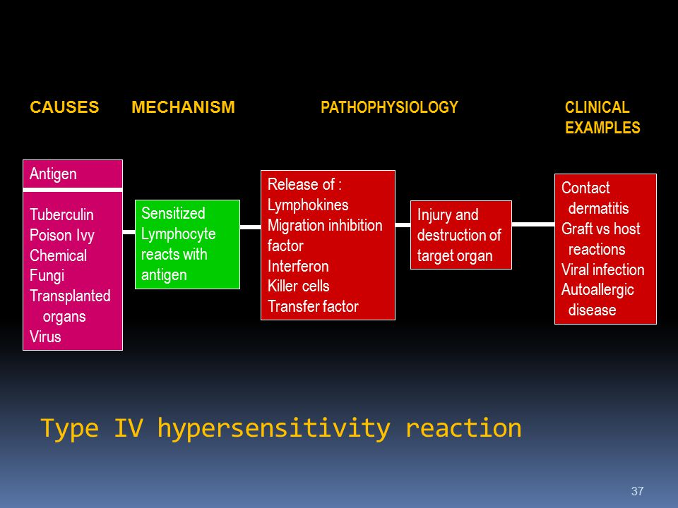 Type IV hypersensitivity reaction 37 CAUSESMECHANISM PATHOPHYSIOLOGY CLINICAL EXAMPLES Release of : Lymphokines Migration inhibition factor Interferon Killer cells Transfer factor Injury and destruction of target organ Antigen Tuberculin Poison Ivy Chemical Fungi Transplanted organs Virus Contact dermatitis Graft vs host reactions Viral infection Autoallergic disease Sensitized Lymphocyte reacts with antigen